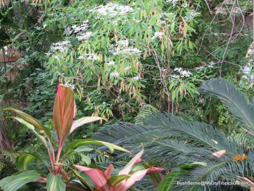 Courtyard Garden plants