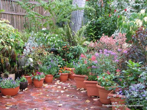 Courtyard Garden - early Winter 2013
